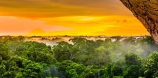 Pôr do sol sobre as árvores na floresta brasileira do Amazonas.