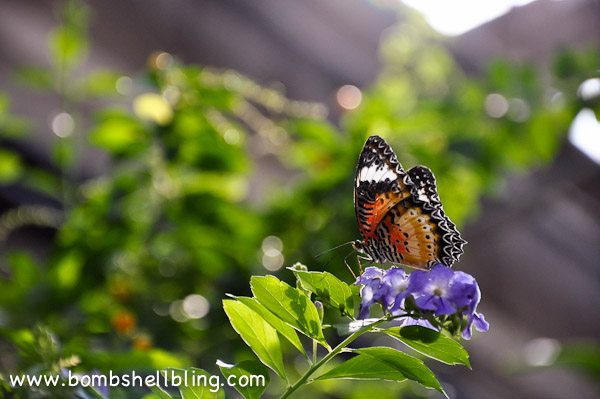 Butterfly House 2013-16