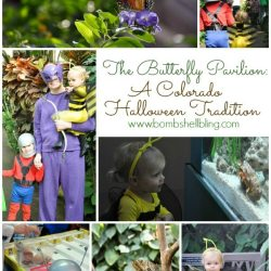 The Butterfly Pavilion: A Colorado Halloween Tradition