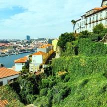Porto ivy cascade