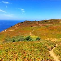 Cabo da Roca grassy cliffs