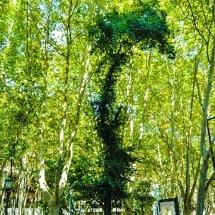 Walk Pena trees 8.10.16 -1