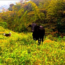 Cow and Dog pose