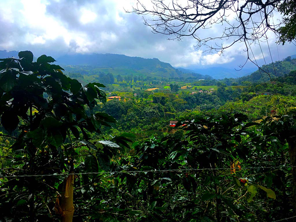 Coffee Talk: Growing coffee the Colombian way