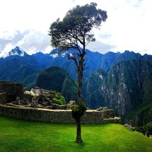 Machu Picchu tree pano