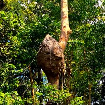 Termite nest