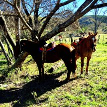 1Gaucho life horses