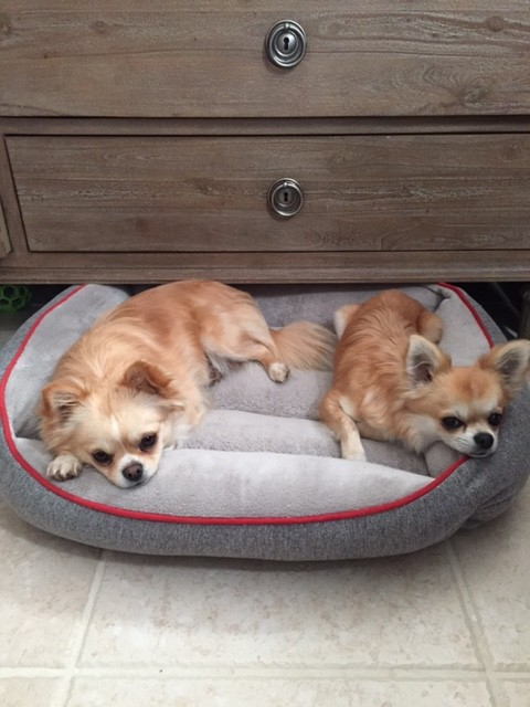 kingsley and charmer sharing bed