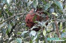 すぐ横に2つ目の巣発見!