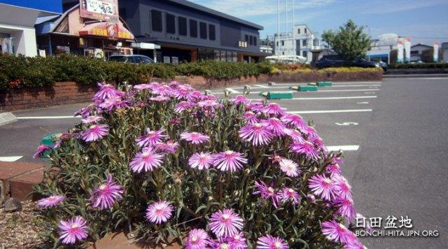 最高気温日本一の日田市、31.3度