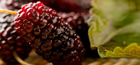 23-Amazing-Benefits-Of-Mulberries-For-Skin-Hair-And-Health