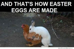 rabbit and chicken funny easter