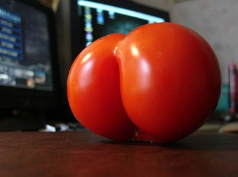 Tomato that looks like a bum