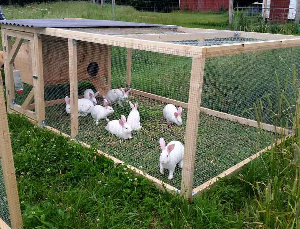 Man spiser da kaniner!