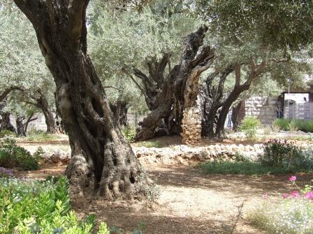 Gerusalemme Monte degli Ulivi
