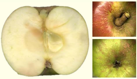 Bloemeezoet vrucht