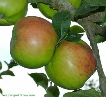 Bramley's Seedling appels