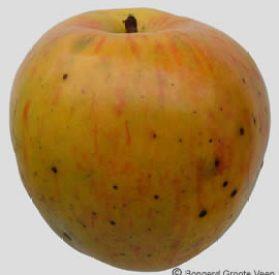 Notarisappel vrucht