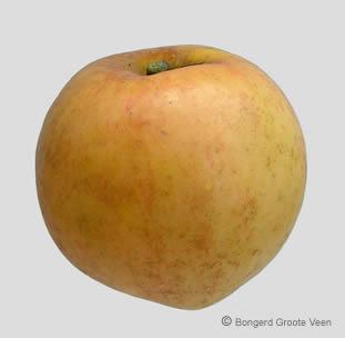 Oranje Reinette van Pomona appel