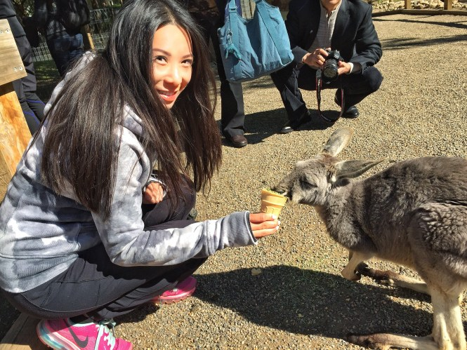 sydney australia travel guide opera house koala kangaroo featherdale wildlife park
