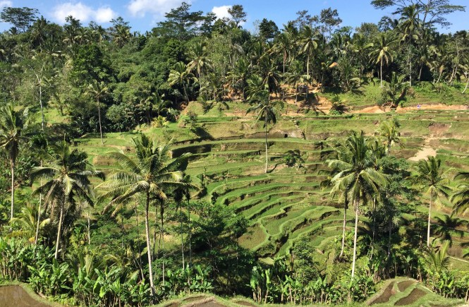 Tegallalang Rice Terraces in Bali
