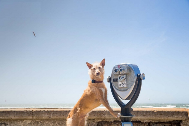 Keep Your Pup In Check With WhistleGPS Dog Monitor