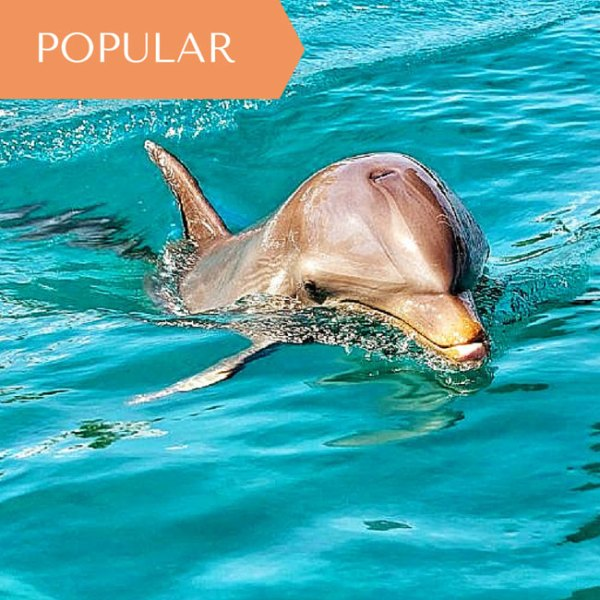 Mauritius Dolphin