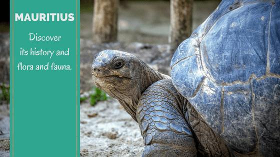 mauritius-history-and-flora-and-fauna