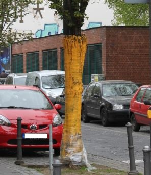 Unbekannte beschädigen Zierkirsche in Bonner Altstadt - Wer hat etwas beobachtet?