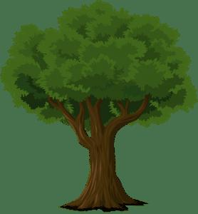 Stadt bittet um Wasserspenden für Bonner Bäume