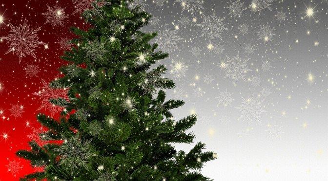 Beleuchtete Tannenbäume sorgen in Bonn für weihnachtlichen Glanz