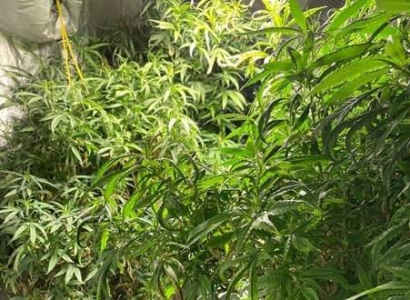 Königswinter: Bonner Polizei hebt Cannabisplantage aus - Zwei Festnahmen