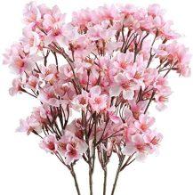 Kirschblüte in der Bonner Altstadt - Hol Dir jetzt Deinen Kirschblütenzweig nach Hause!