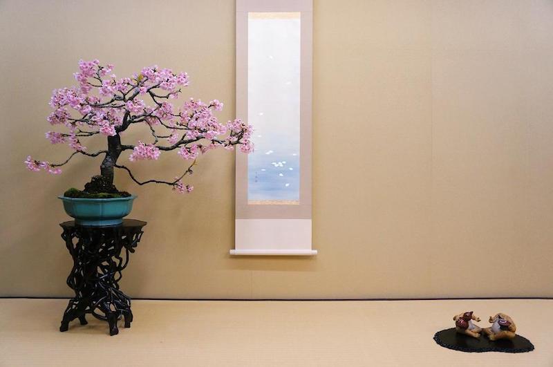 Bonsai cherry tree in full bloom