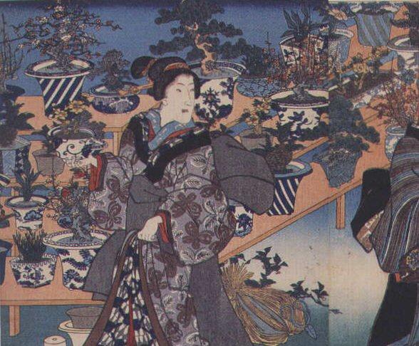 IV Ka Japanese Bonsai history