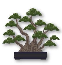 Estilo Bonsai Kabudachi varios troncos