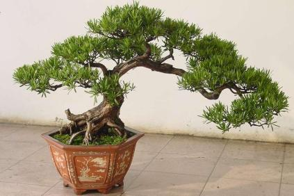Indoor Bonsai Everything You Need To Know Bonsai Sanctum