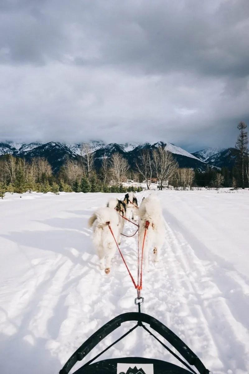 Dogsledding with Base Camp Bigfork