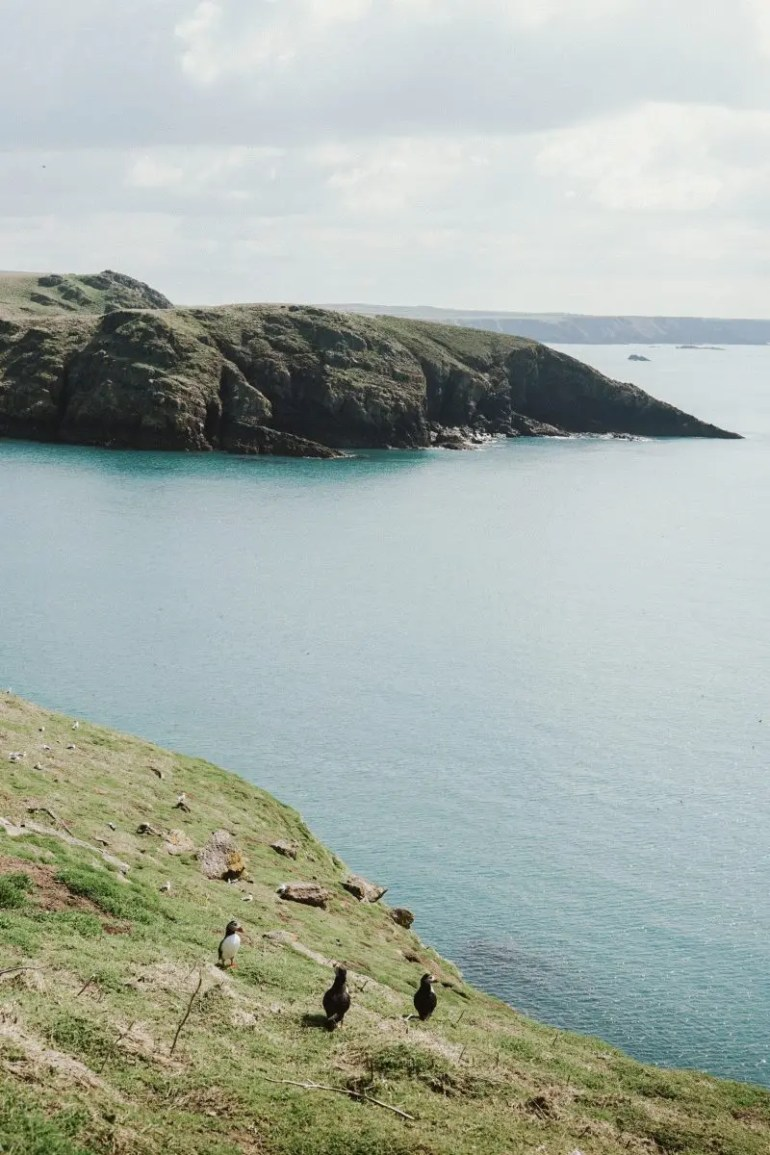 How to See the Puffins on Skomer Island in Wales