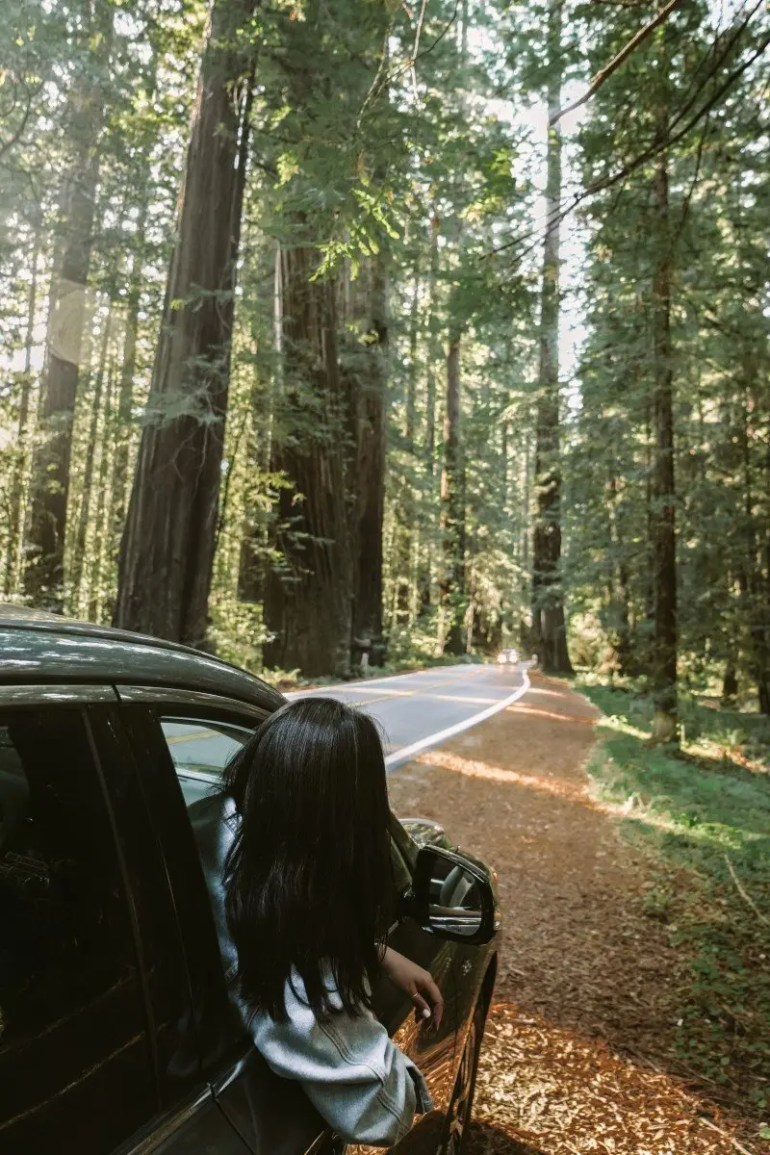 A Guide to Visiting the Avenue of the Giants