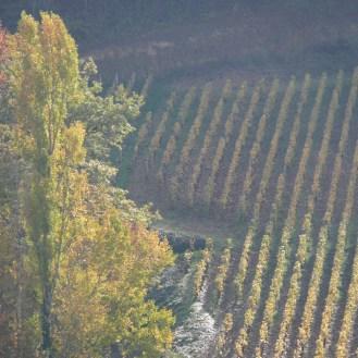 photo de vigne Bonum Vinum