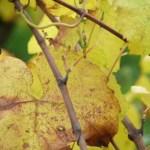 Guy Bossard automne