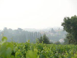 Crus communaux du Muscadet