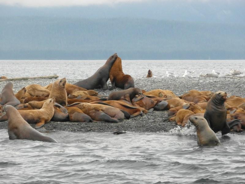 The Best of Juneau, Alaska!
