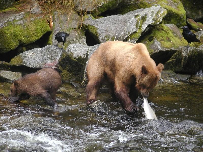 Strangers in Paradise … Ketchikan, Alaska