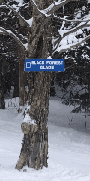 skiing-with-kids-glade-sign-on-tree