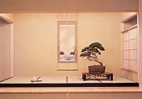 The Taikan (Bonsai Museum)