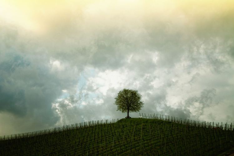PoeticamenteVenerdì - La Collina, Edgar Lee Masters.