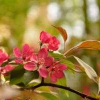Poetocamentevenerdì - È maggio di Giovanni Pascoli