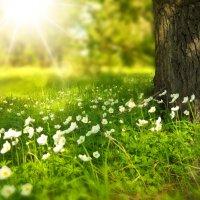 La poesia della settimana: La primavera di Grazia Deledda